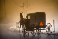 Buggy in Fog