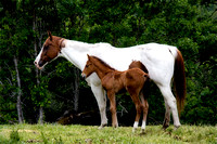 Mare and Colt #2