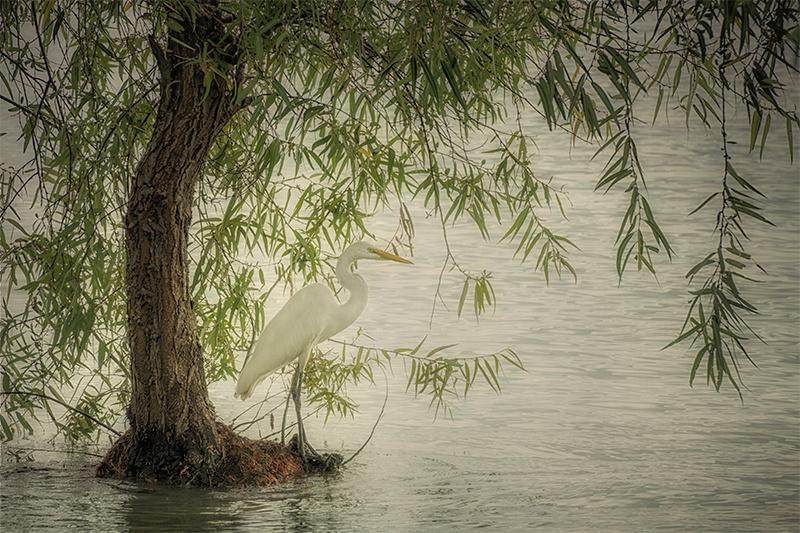 Camouflaged Egret