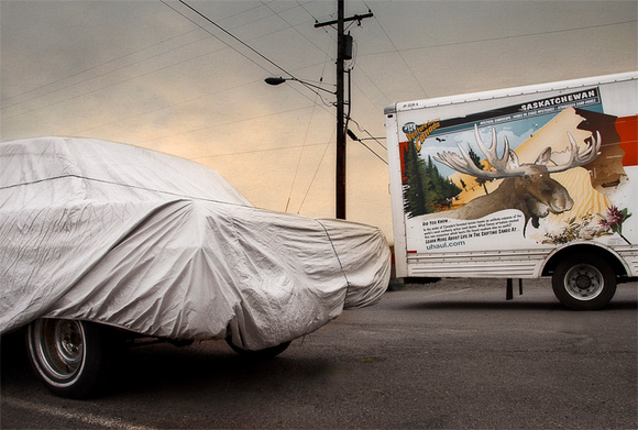 Car Cover and Moose Head
