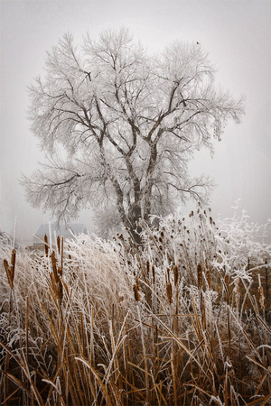 Frosted Tree #4
